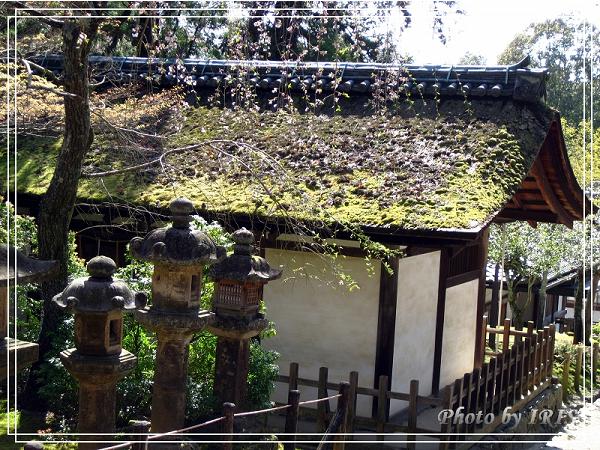 奈良古寺與梅花鹿2010_0408_132925.jpg