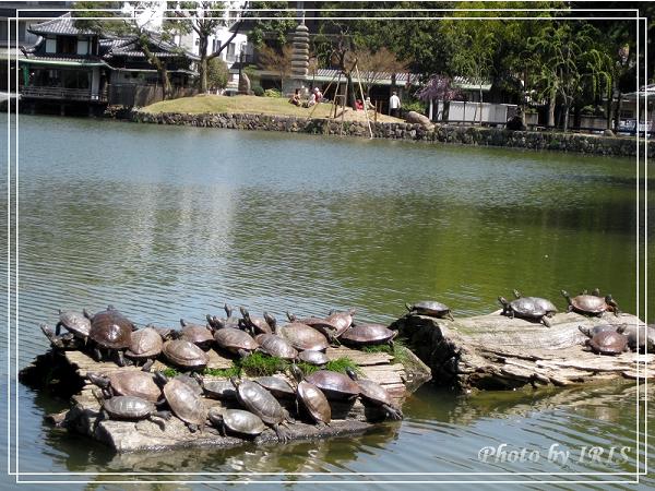奈良古寺與梅花鹿2010_0408_112814.jpg