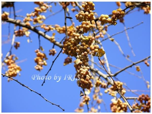 PICT7932.jpg