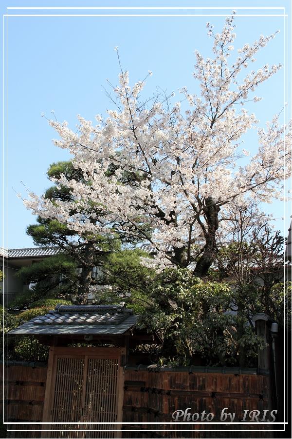 京都文化遺產2010_0403_090209.jpg
