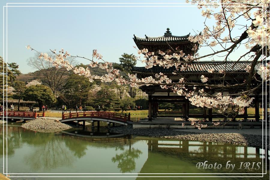 京都文化遺產2010_0403_091631.jpg