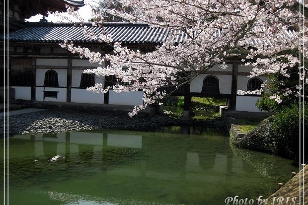 京都文化遺產2010_0403_091426.jpg