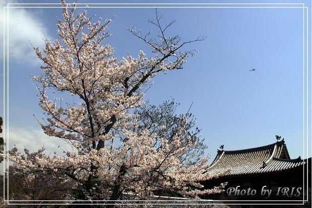 京都文化遺產2010_0403_092035.jpg
