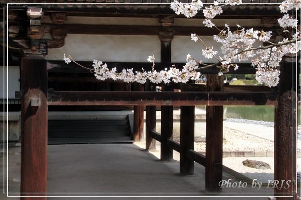 京都文化遺產2010_0403_093201.jpg