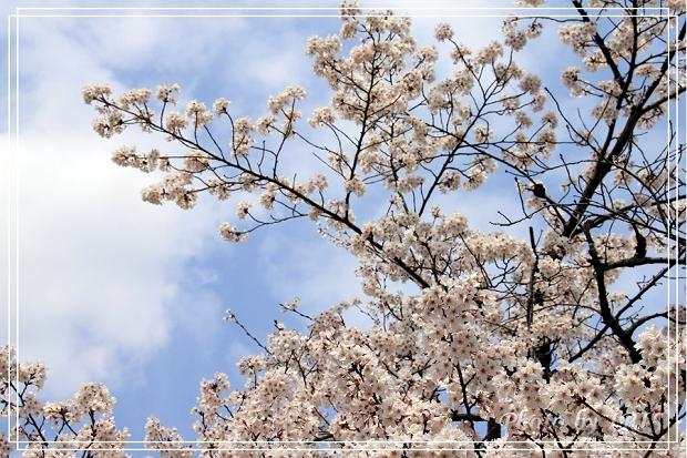 京都文化遺產2010_0403_103028.jpg
