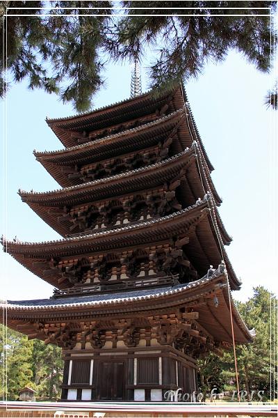奈良古寺與梅花鹿2010_0408_113951.jpg