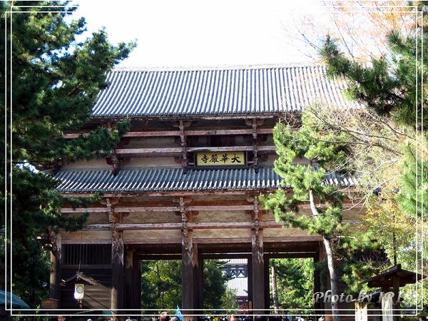 奈良古寺與梅花鹿2010_0408_144258.jpg