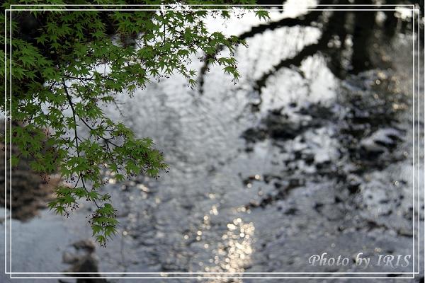奈良古寺與梅花鹿2010_0408_160323.jpg
