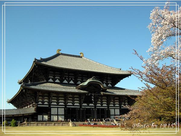 奈良古寺與梅花鹿2010_0408_145917.jpg