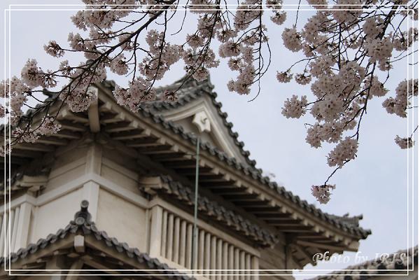 京都0405010.jpg