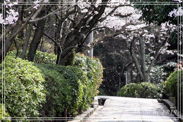 清水寺和服變裝2010_0406_093525(001).jpg