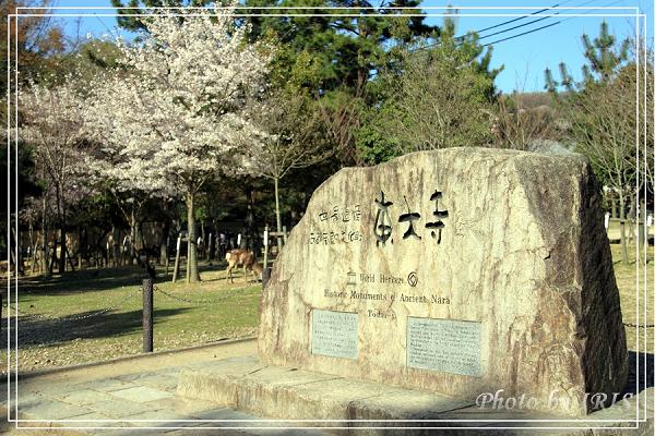 奈良古寺與梅花鹿2010_0408_144120.jpg