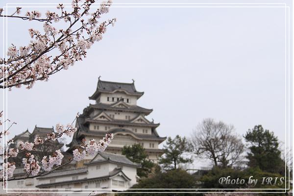 京都0405006.jpg