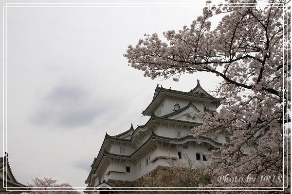 京都0405040.jpg