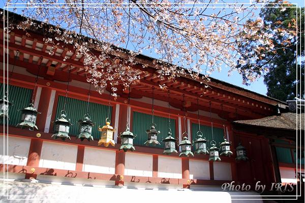 奈良古寺與梅花鹿2010_0408_132149.jpg