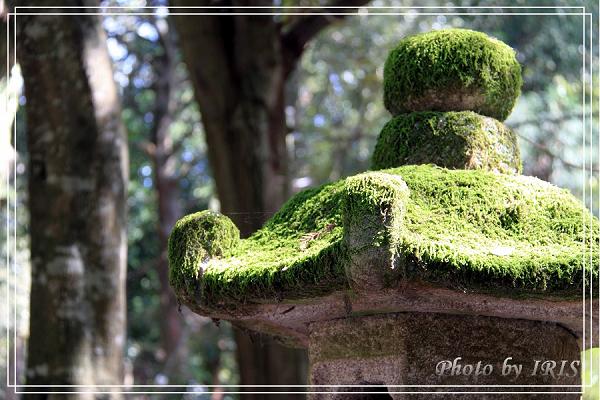 奈良古寺與梅花鹿2010_0408_124726.jpg