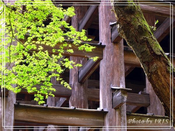清水寺和服變裝2010_0406_110427.jpg