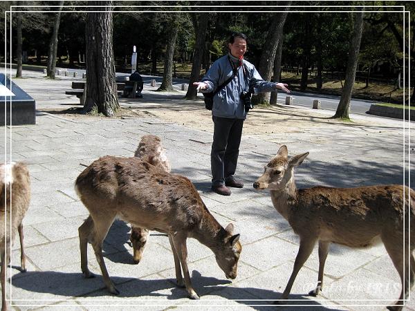 奈良古寺與梅花鹿2010_0408_122202.jpg