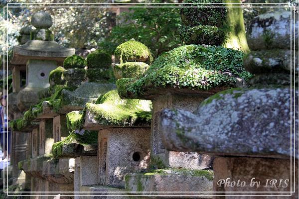 奈良古寺與梅花鹿2010_0408_125828.jpg