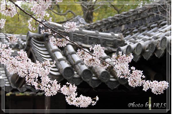 京都0405070.jpg