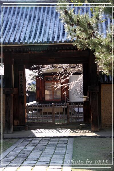 奈良古寺與梅花鹿2010_0408_145404.jpg
