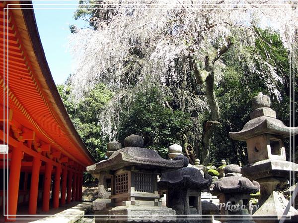 奈良古寺與梅花鹿2010_0408_130811.jpg