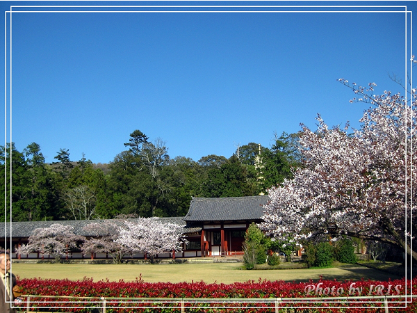 奈良古寺與梅花鹿2010_0408_150222.jpg