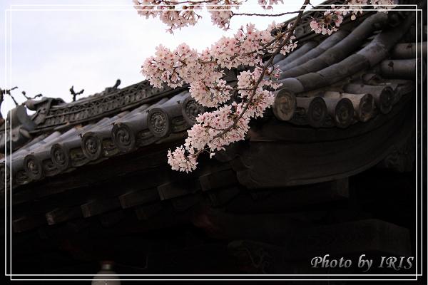 清水寺和服變裝2010_0406_171518(001).jpg