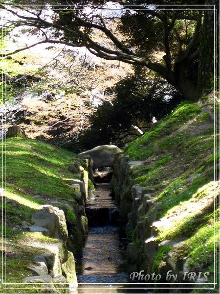 奈良古寺與梅花鹿2010_0408_114930.jpg