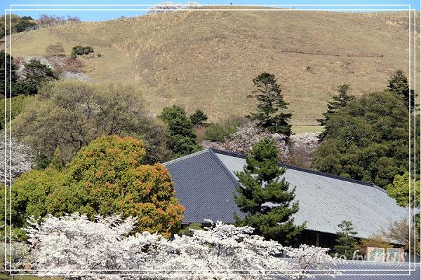 奈良古寺與梅花鹿2010_0408_143103.jpg
