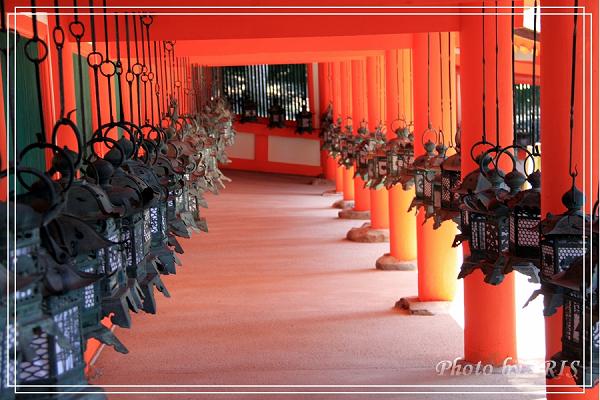 奈良古寺與梅花鹿2010_0408_131734.jpg