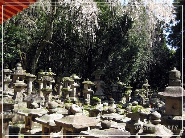 奈良古寺與梅花鹿2010_0408_130858.jpg
