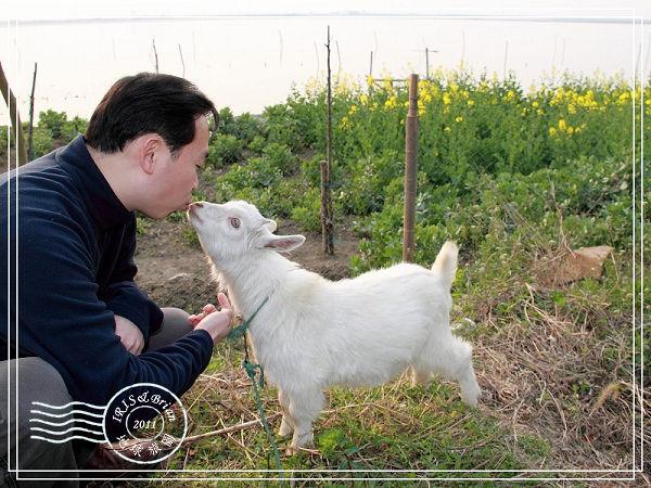 陽澄湖尋找鬱金香0071(001).jpg
