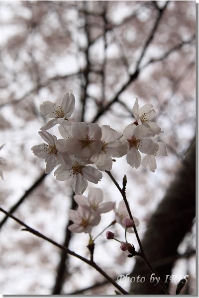 京都0405069.jpg
