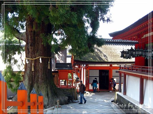 奈良古寺與梅花鹿2010_0408_131425.jpg
