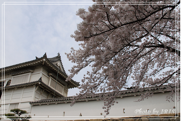 京都0405009.jpg