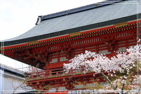 清水寺和服變裝2010_0406_143521.jpg