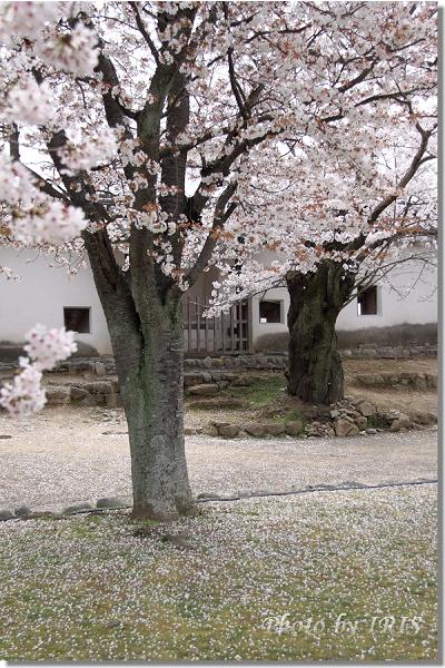 京都0405079.jpg