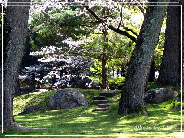奈良古寺與梅花鹿2010_0408_115041.jpg