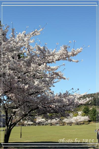 奈良古寺與梅花鹿2010_0408_142819.jpg