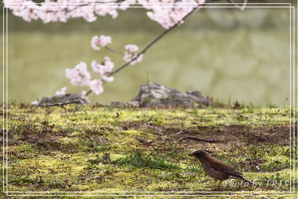 京都0405018.jpg