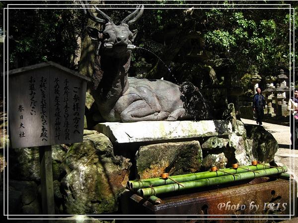 奈良古寺與梅花鹿2010_0408_125808.jpg