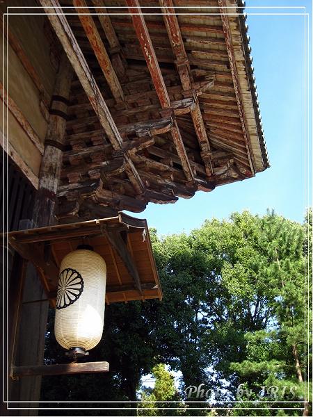 奈良古寺與梅花鹿2010_0408_144507.jpg