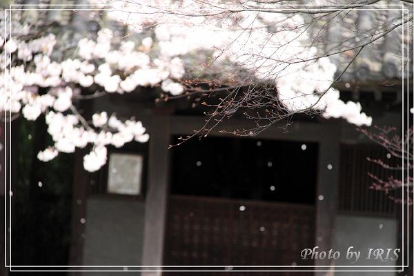 清水寺和服變裝2010_0406_091457.jpg
