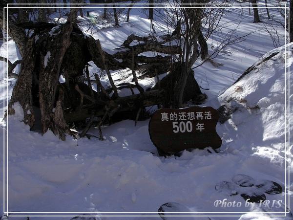 長白山綠淵潭-14.jpg