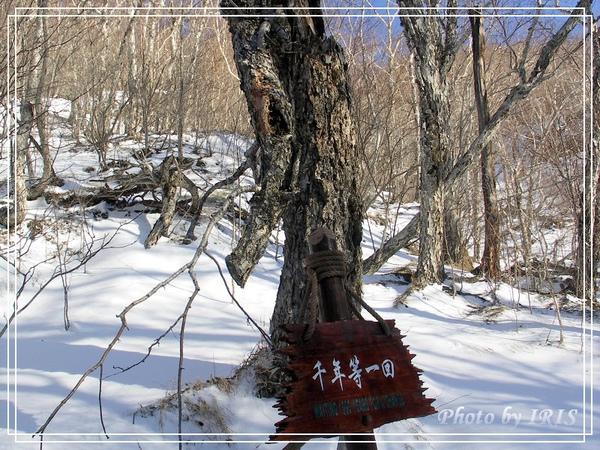 長白山綠淵潭-34.jpg