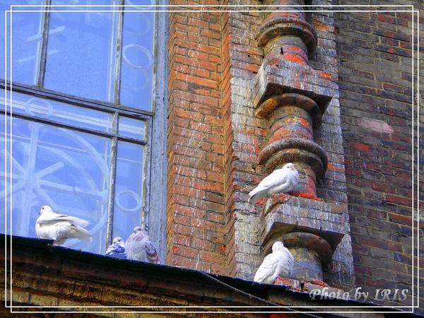 聖索菲亞教堂-11.jpg
