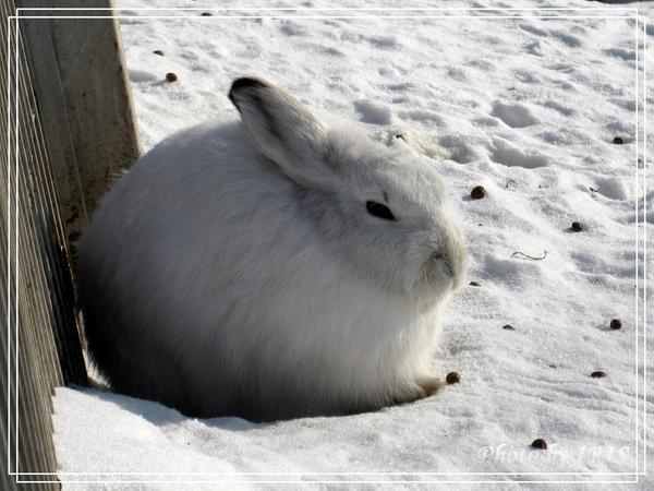 雪兔-5.jpg