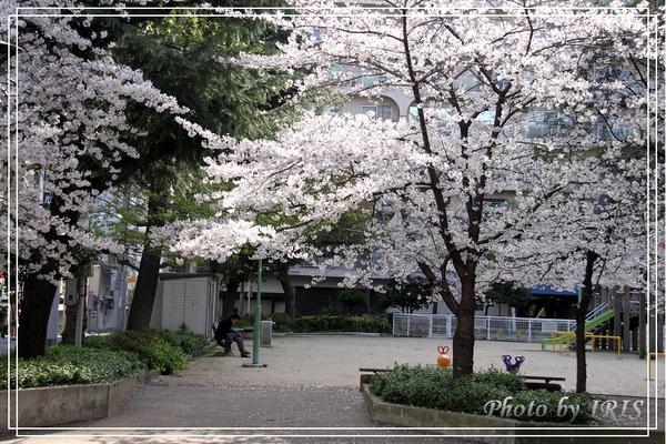 京都文化遺產2010_0403_072555.jpg
