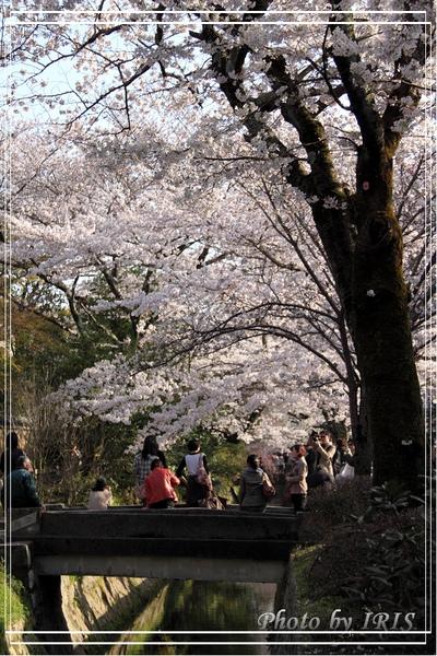 京都單車2010_0404_153346.jpg
